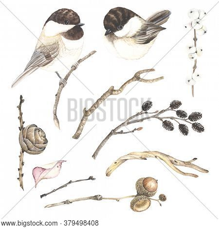 Watercolor set with dry branches tree alder, winter berry, birch, acorn on oak branch, leaf, pine cone and birds chickadee. Autumn and winter isolated illustration in vintage style.
