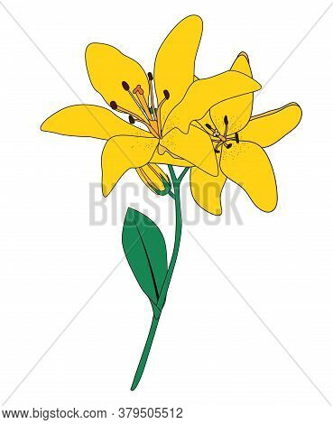 Abstract Hand Drawn Lilly Flower. Isolated. Illustration