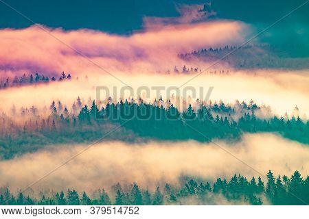 Colorful Autumn Misty Forest. Misty Morning In Saxon Switzerland National Park. Colorful Spring Sunr