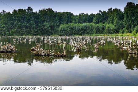Dead Trees In The Lake. Flooded Water Reflection Landscape. View Of The Reflection In The Floodplain