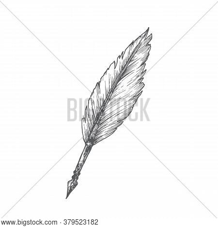 Feather Pen Hand Drawn Doodle Vector Illustration. Abstract Stationary Sketch. School Or Education T