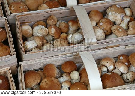 Close Up Brown Porcini Edible Mushrooms (boletus Edulis, Known As Penny Bun Or Cep) In Wooden Crate