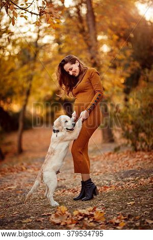 A Beautiful Pregnant Woman In A Tight Dress Plays With A Golden Retriever Puppy In An Autumn Park.
