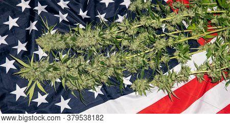 The Cultivation Of Reclaimed Marijuana Worldwide. Cannabis Smoking Culture