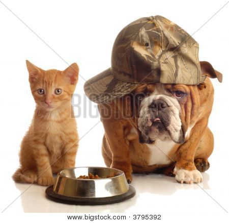Bulldog And Cat At Food Dish Together