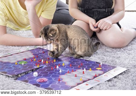 Children Play With A British Little Playful Kitten At Home On The Carpet. A Kitten Scatters The Chip
