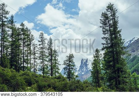 Atmospheric Nature Scenery With Great Beautiful Snowy Mountains Behind Coniferous Forest Under Cloud