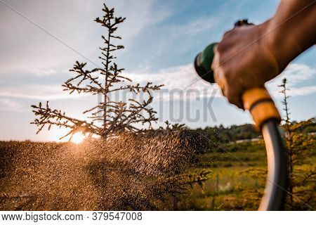Watering Plants In The Garden. Close-up Of Hand With Garden Hose Splashing Water