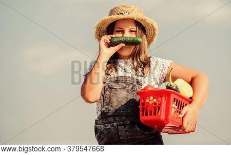 Kid Work At Farm. Little Helper Concept. Ripe Veggies. Family Farm. Girl Adorable Child Farming. Har