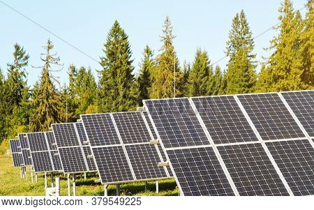 Solar Panel Collectors In Forest, Coniferous Trees Background, Clear Sky Above, Closeup Detail