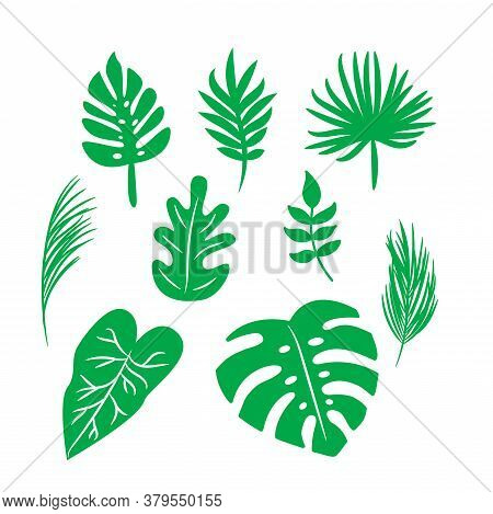 Vector Tropical Palm Leaves, Jungle Green Leaves, Split Leaf, Monstera Leaf Set Isolated On White Ba