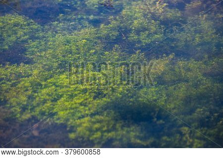 Aquatic Plants In Clear Water At Krupajsko Vrelo (the Krupaj Springs) In Serbia, Beautiful Water Spr