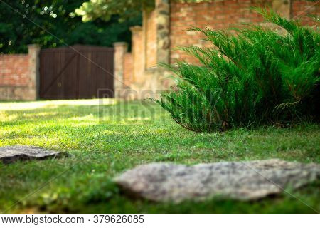 Landscaping. Plants And Flowers On The Background Of A Brick Fence In The Courtyard Of A Private Hou