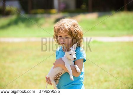 Child Plays With Little Dog Chihuahua Mixed Doggy. Fun Games With Home Pet On Summer Vacation