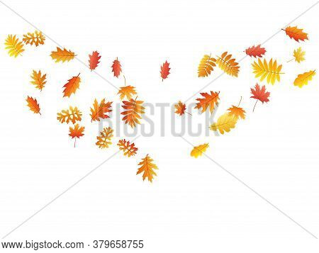 Oak, Maple, Wild Ash Rowan Leaves Vector, Autumn Foliage On White Background. Red Gold Yellow Wild A