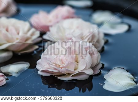 Pale Pink Rose Flowers And White Petals On Blue Water. For Water Festival Or Spa