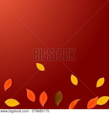 Falling Autumn Leaves. Red, Yellow, Green, Brown Neat Leaves Flying. Gradient Colorful Foliage On Pl
