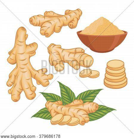 Ginger Vector Set Illustration With Ginger Powder In The Bowl