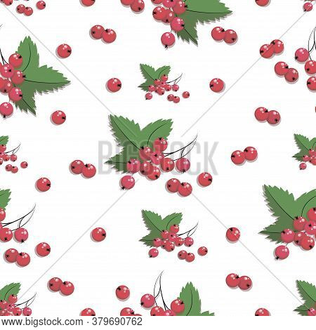 Redcurrant Pattern. Vector Currant Berries. Twig Redcurrant With Leaf Isolated On White Background F