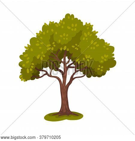 Tree With Trunk And Lush Crown Or Foliage As Forest Element Vector Illustration
