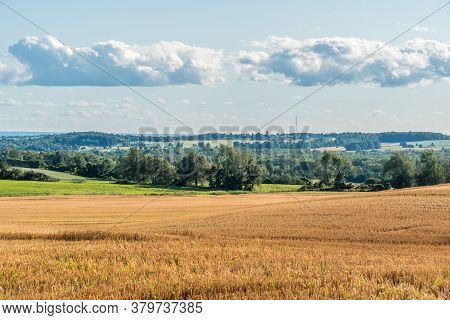 Yellow Farm Field At Fall Under Blue Sky With White Clouds In Ontario, Canada