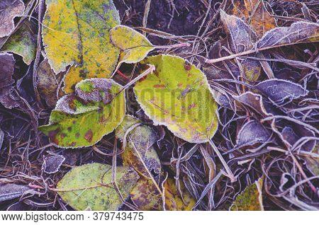 Fall Foliage Sunny Autumn Background. Colorful Beautiful Autumn Leaves Texture