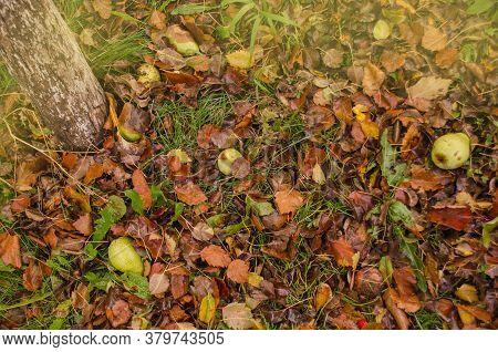 Colorful Beautiful Autumn Leaves Texture. Sunny Autumn Background.