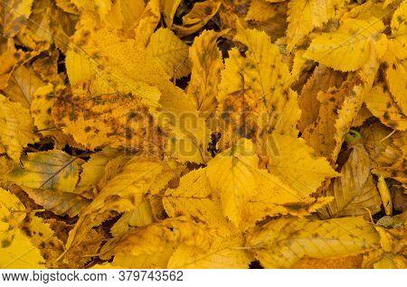 Autumn Leaf Texture. Colored Falling Leafs