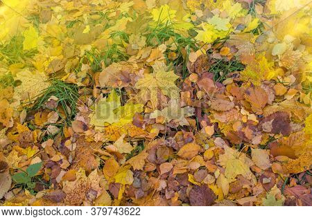 Autumn Leaves Texture. Autumn Fall Colorful Background