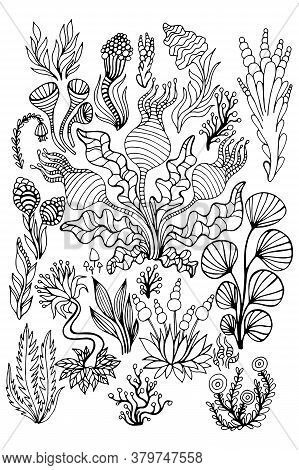 Big Set Black And White Abstract Doodle Surreal Plants, Flowers, Mushrooms, Isolated Background.