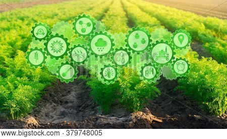 Futuristic innovative technology pictogram on green farm carrot fields on an sunny day. Agricultural startups, improvements, digitalization agriculture industry. Innovation and development.