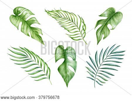 Exotic Monstera And Palm Leaf Watercolor Set. Hand Drawn Botanical High Quality Tropical Leaves Illu