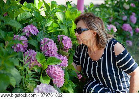 Senior Woman In The Garden With Hydrangea. Pretty Woman Smelling Pink Hydrangea Bunch In The Backyar