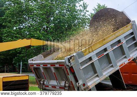 A Wood Chipper At Work Machinery, Wood Shredder Placed In The Intake Chute For Chipping After An Une