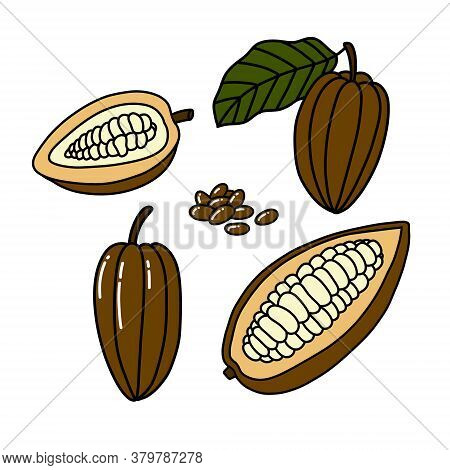 Cacao Fruit And Beans Doodle Icon, Vector Color Illustration