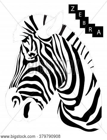 Zebra Isolated On The White Background. Cool Zebra Animal.