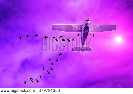 Airliner Landing With A Flock Of Birds Flying Around. Airplane Collision With Flock Of Birds At Suns