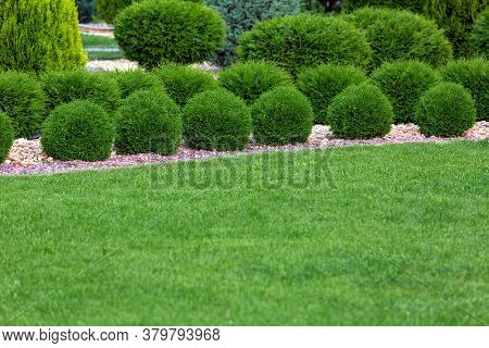 Landscaping Of A Backyard Garden With A Green Lawn Glade By Evergreen Cypress Bushes In A Summer Par