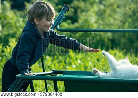 A little boy is playing with cat outdoors.