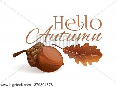 Hello Autumn. Autumn Lettering Card. Autumn Design With An Acorn And A Dried Oak Leaf. Vector Illust