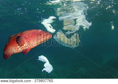 Plastic pollution in ocean and fish eating plastic straw and bag. Microplastics pollute the sea and can contaminate seafood