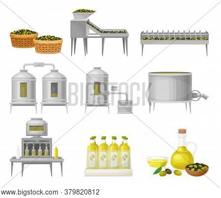 Olive Oil Production With Fruit Harvesting And Liquid Fat Extraction Vector Illustration Set