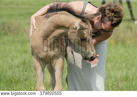Young Woman Cuddling With Her Best Friend, Falcon Color Stallion Foal, Share A Loving Moment