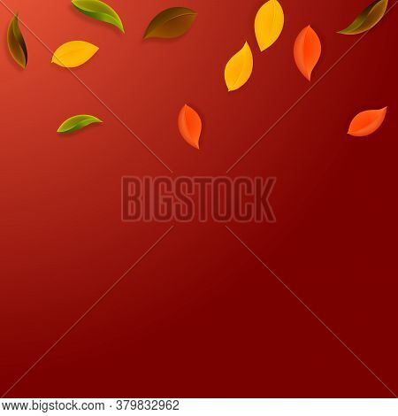 Falling Autumn Leaves. Red, Yellow, Green, Brown Neat Leaves Flying. Gradient Colorful Foliage On Im