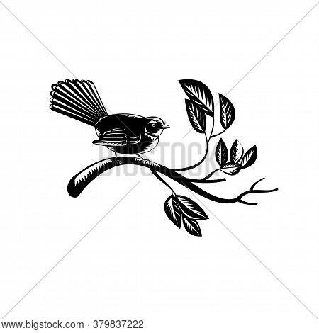 Retro Woodcut Style Illustration Of A New Zealand Fantail Rhipidura Fuliginosa, A Small Insectivorou