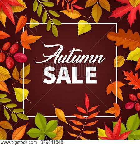 Autumn Sale Vector Poster. Fallen Leaves Maple, Rowan And Chestnut, Oak And Birch Trees. Autumnal Di