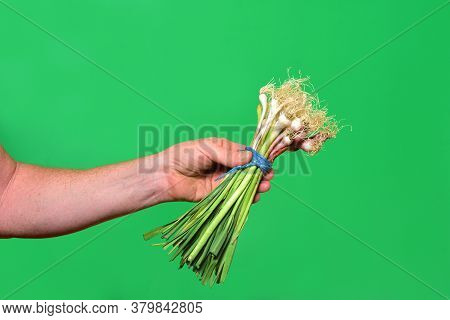 Hand Holding A Tender Garlic On Green Background