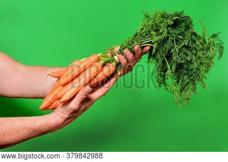 Bunch Of Carrots On A Green Background