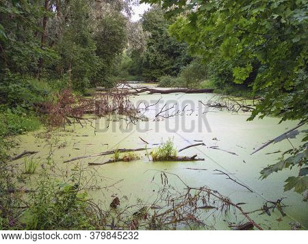 Mysterious Forest With Swamp. Scenery Of Dark Forest With Swampy Lake. View With Dead Trees In The W