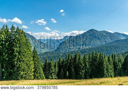 Scenic View Over Conifer Forest In A Mountain Valley